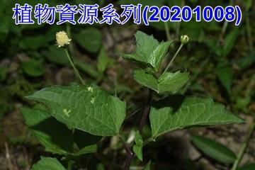 植物資源系列(20201008)