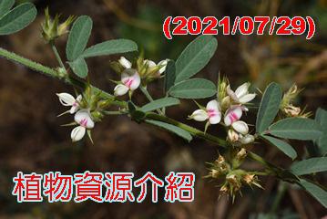 植物資源介紹(2021/09/29)